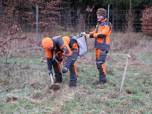 Die Bäume wurden in Schleswig-Holstein eingesetzt. Foto: © Warema