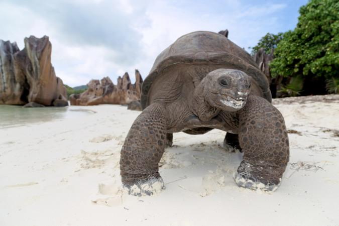 "Foto: ©Chris Close/Seychelles Tourism Board"" for eg. Chris Close –STB"