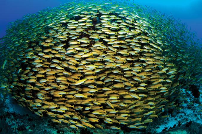 "Foto: © Imran Ahmad/Seychelles Tourism Board"" for eg. Chris Close –STB"